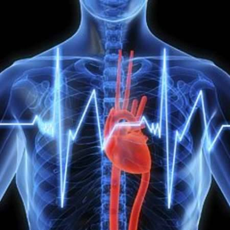 грудная клетка и сердце