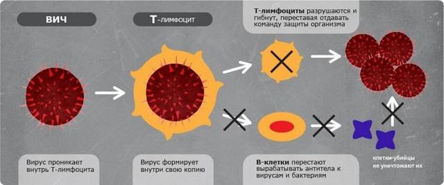 Первые признаки ВИЧ у мужчин и женщин, основные симптомы ВИЧ указывающие на заражение