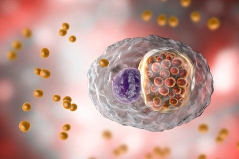 Симптомы орнитоза у человека, лечение и причины возникновения