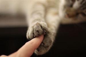 Болезнь кошачьих царапин: проявления болезни и способы лечения