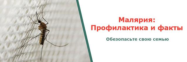 Симптомы малярии, лечение и правила профилактики