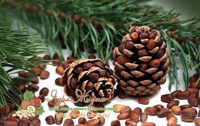 Кедровые орехи: польза и вред