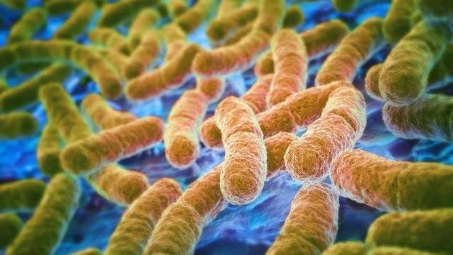 Газовая гангрена: возбудитель болезни, симптомы и варианты лечения